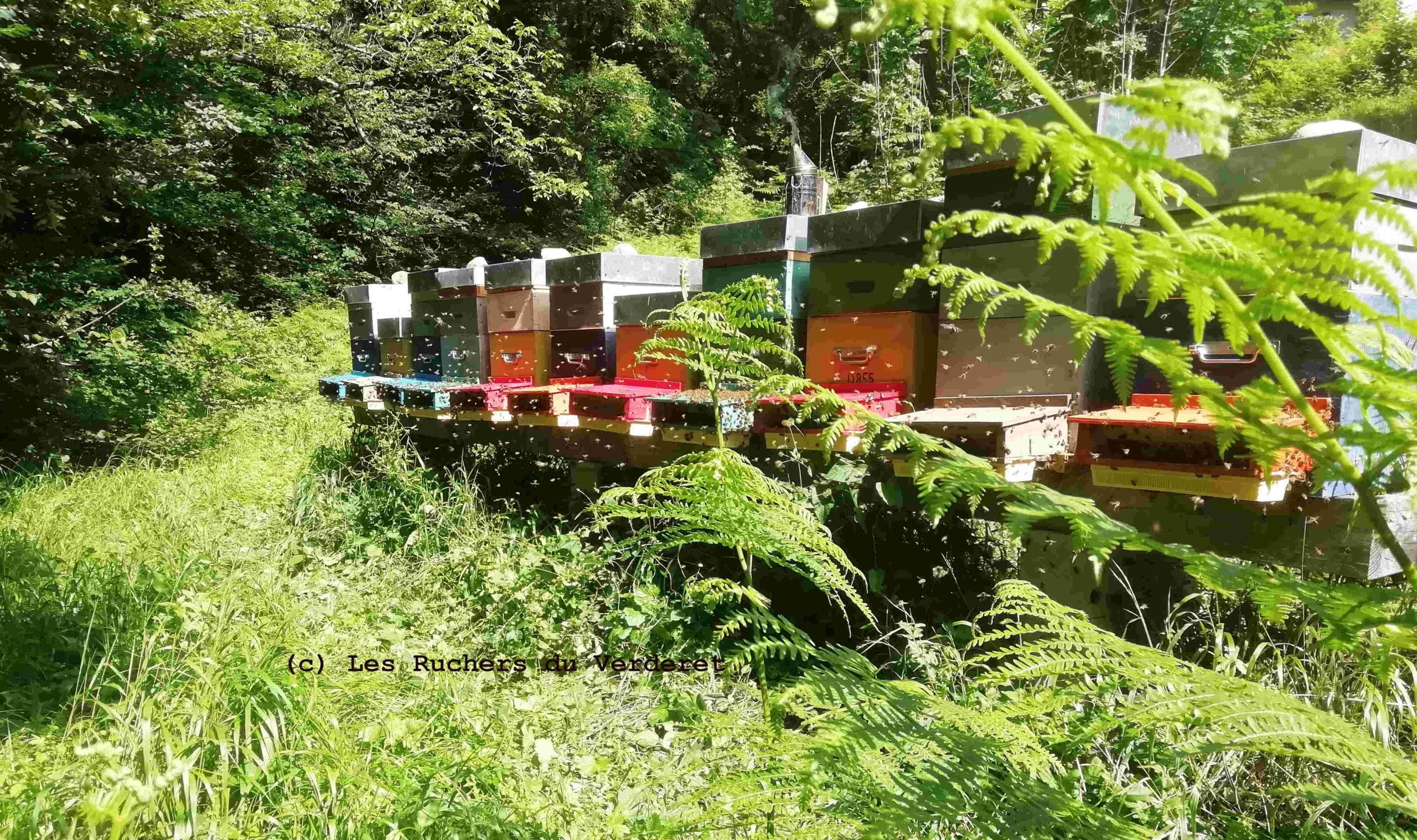 ruches équipées de trappes à pollen